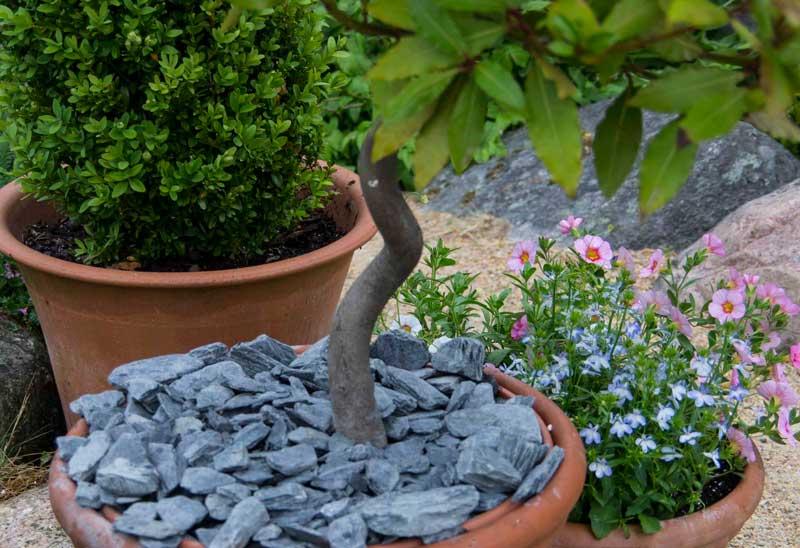 Legg gjerne et dekke oppå jorden i potten slik at det ikke fordamper unødig mye vann av jordoverflaten.