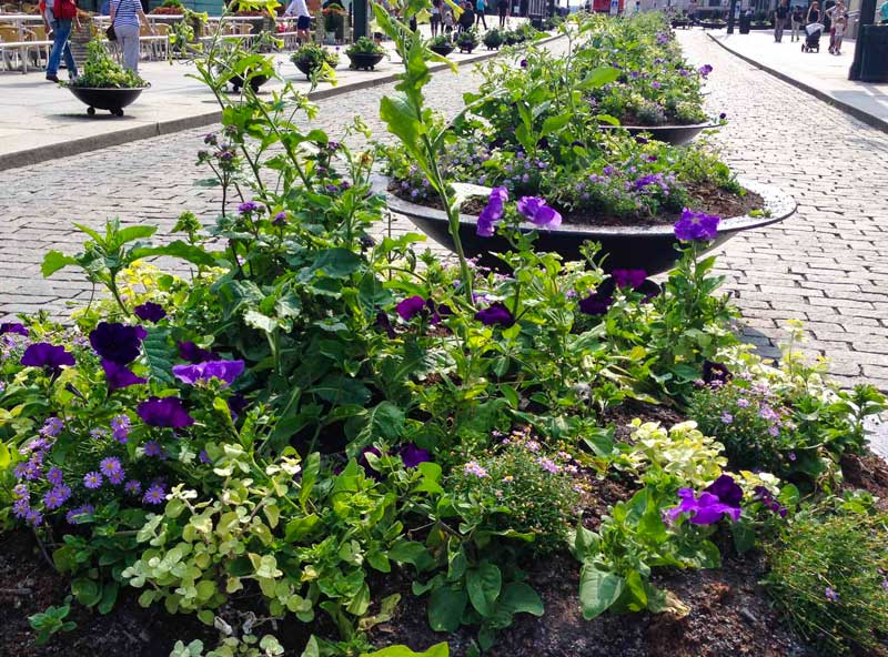Annuals_in_Oslo