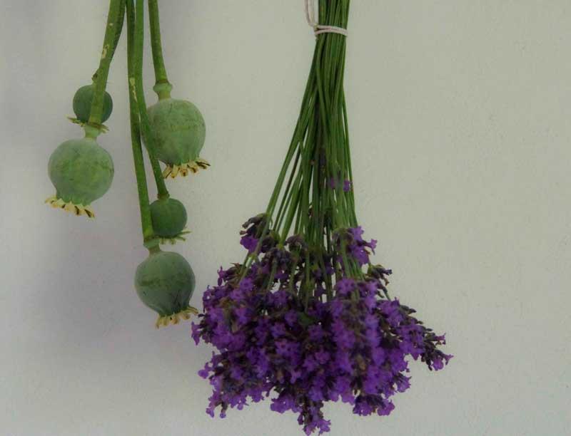 Heng blomstene på en luftig plass uten direkte sollys. De tørkede blomstene kan legges i små tøyposer mellom senge tøy og badehåndklær, eller i en skål på peishyllen som avgir mild lavendeldy\uft i flere måneder.
