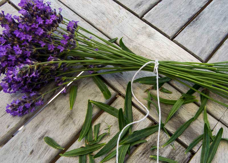 Bind sammen stilkene med sterk bomullstråd som du feks.  får kjøpt i matvarebutikkene. Knyt fast rundt stilkene minst to ganger siden stilkene krymper når de tørker.