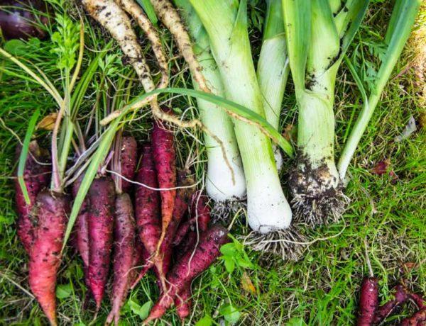 vegetables_