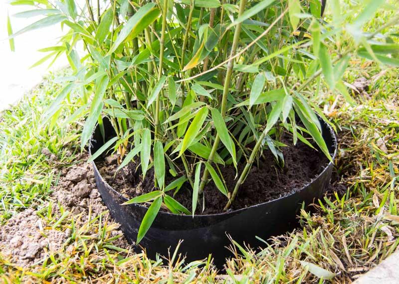 Bambooscreening5_