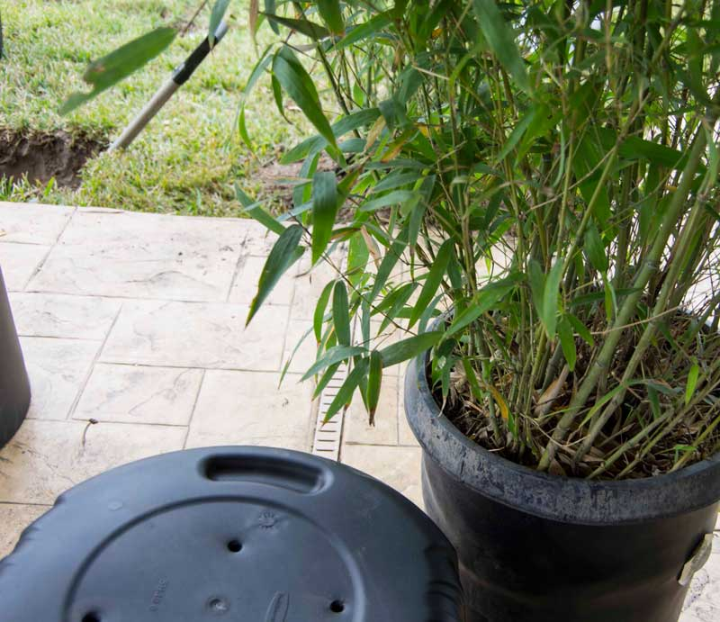 Bambooscreening_1