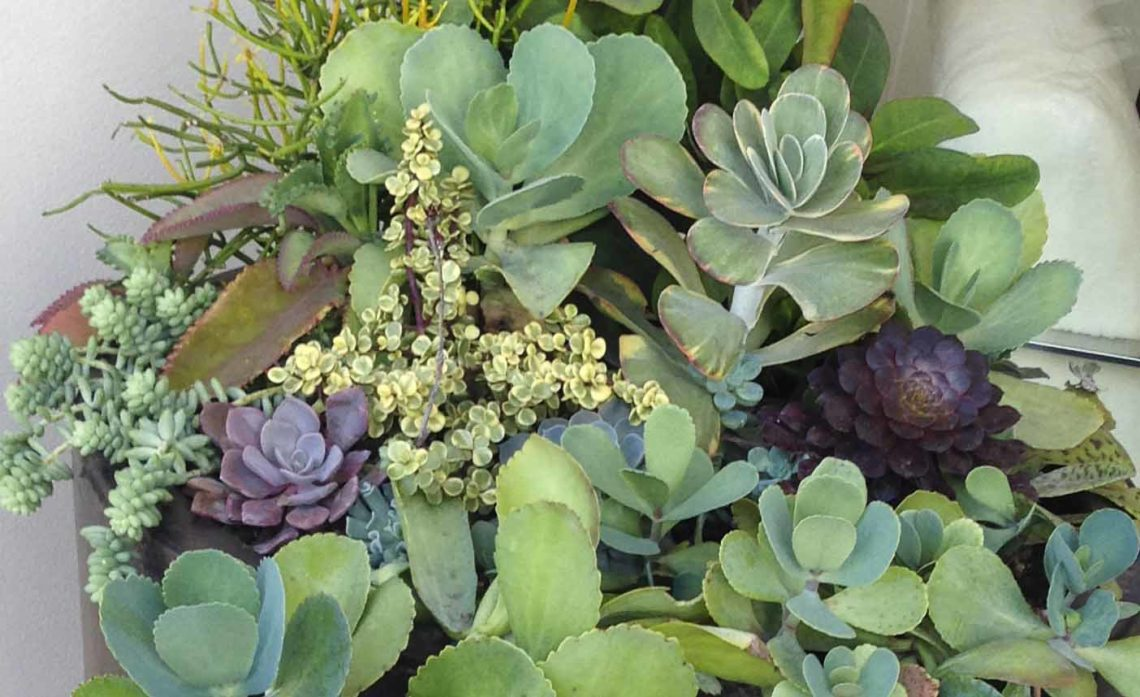 Plant succulents in a container2_