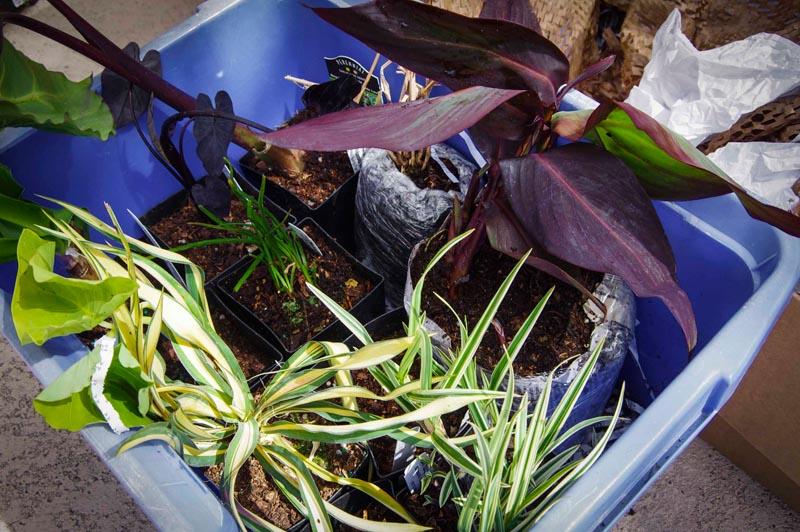 buy plants internet3_