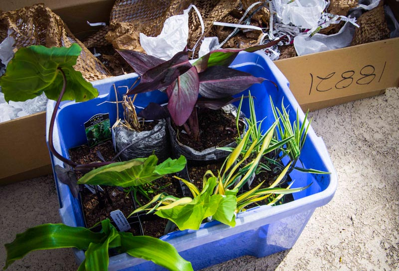 buy plants internet4_