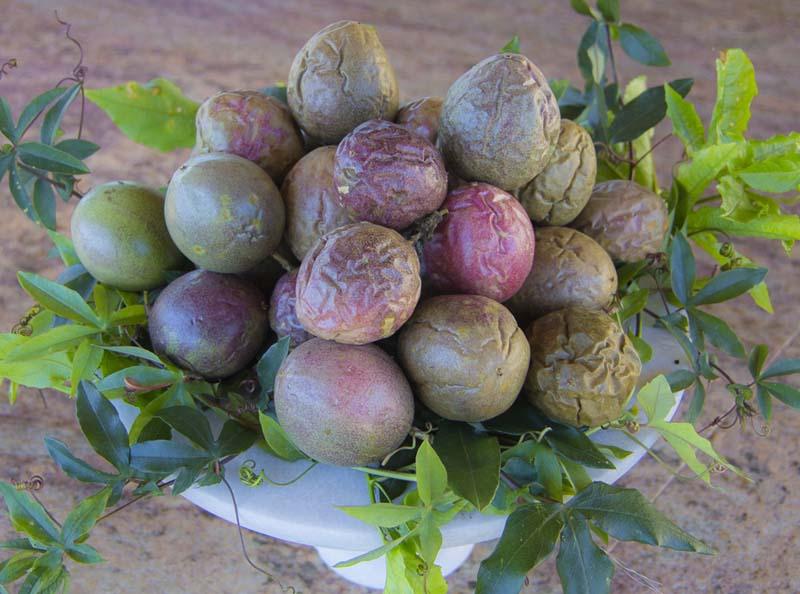 passionfruit passion_
