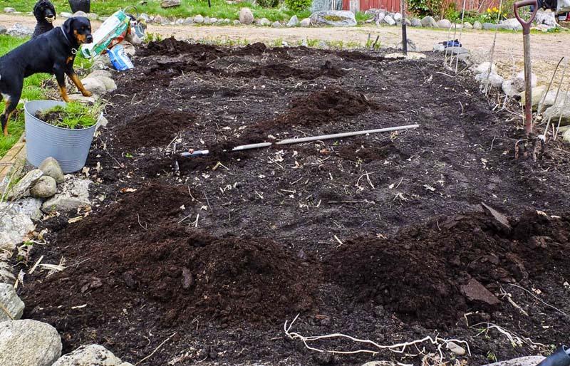 Grønsakhagen tidlig i april. Jeg bruker litt blåkorn (eller Algumin) og kugjødselkompost._