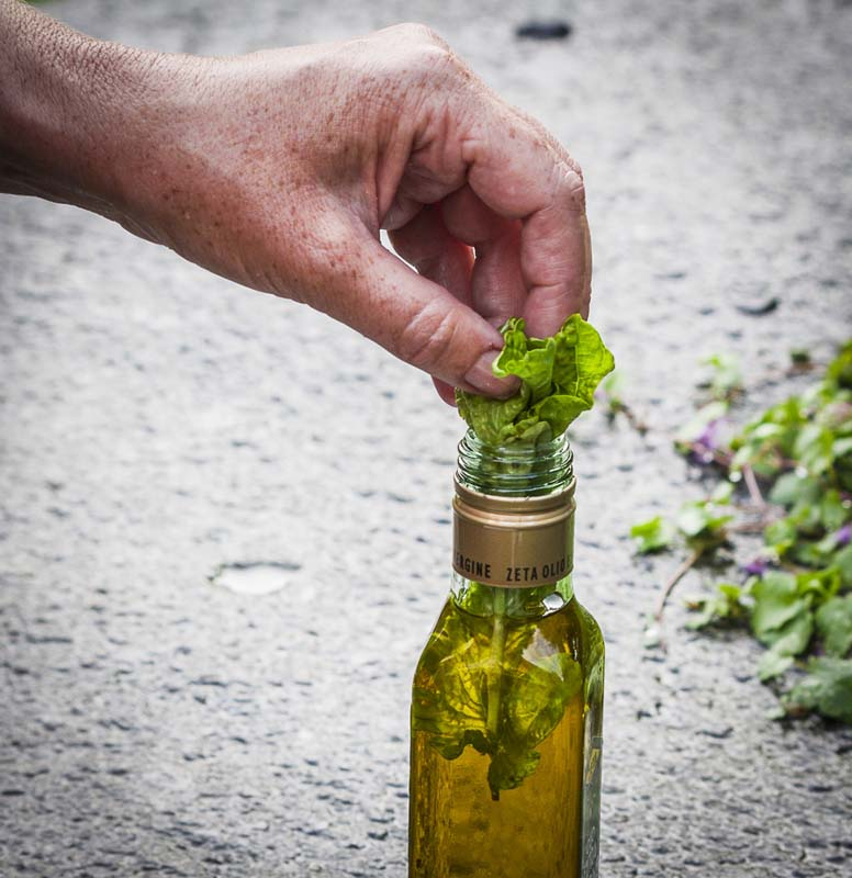 Basil and olive oil_