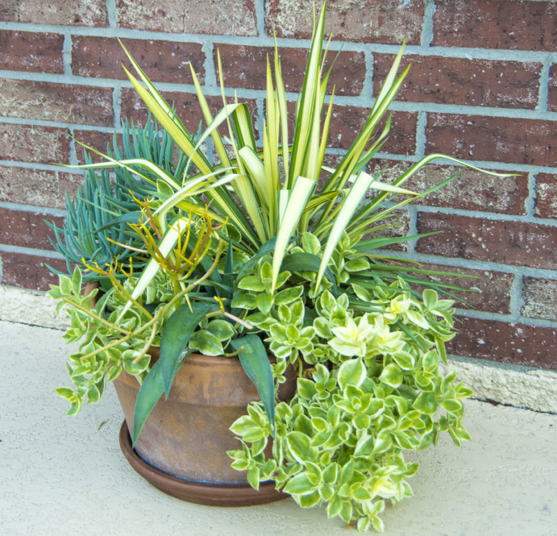 Succulentcontainer_may_