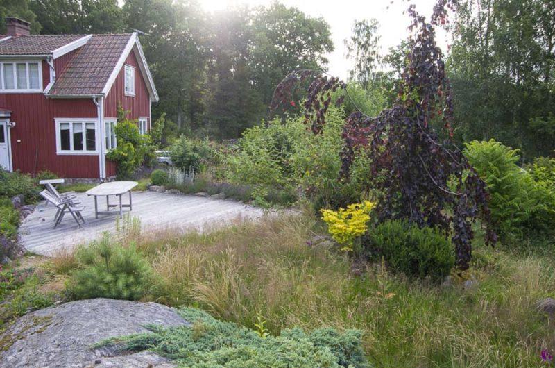 Overgrown garden_