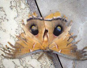 Moth_